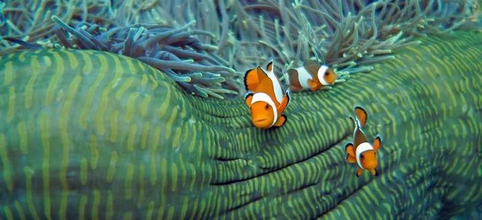 Znalazłem Nemo :)