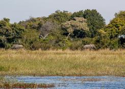 Fauna w delcie Okavango