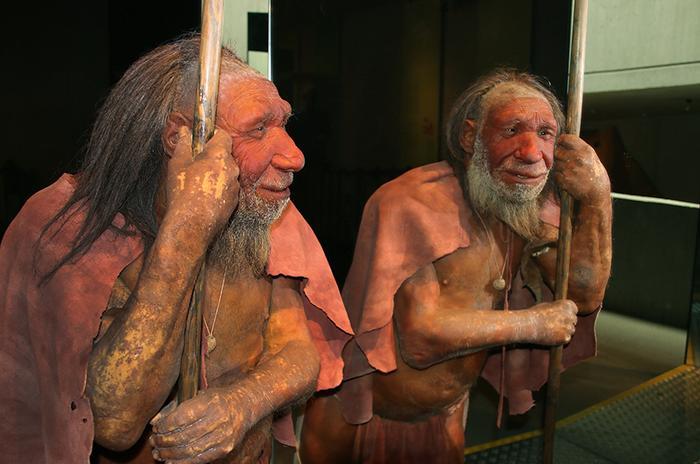Neandertalczyk - rekonstrukcja