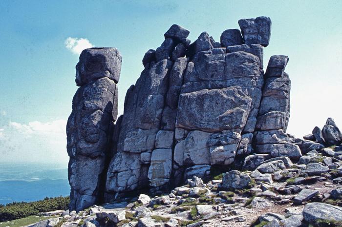 Diabelska skała - Słonecznik karkonoski