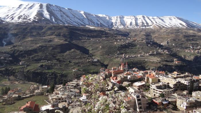 Boże Cedry występują naturalnie w najwyższych piętrach gór