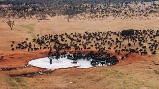 Tsavo East,Kenia