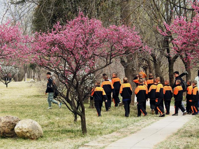 Adepci sztuk walki w Shaolin