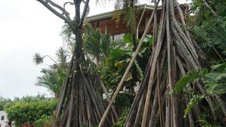 Drzewa w Port Douglas