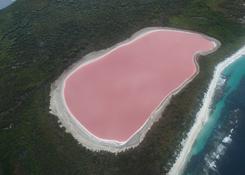 Okrutnie różowe Jezioro Hillier, Australia Zachodnia