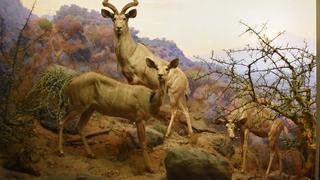 Wystawa Muzeum Historii Naturalnej
