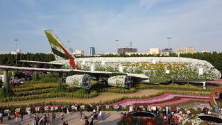Airbus z petunii