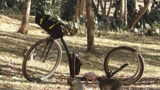 Nieustraszony podróżnik obawia się małych małp (Róg Afryki, Erytrea, styczeń 2019)