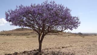 Afryka to przede wszystkim przyroda, wolność i bezkresne przestrzenie (Róg Afryki, Erytrea, styczeń – luty 2019)