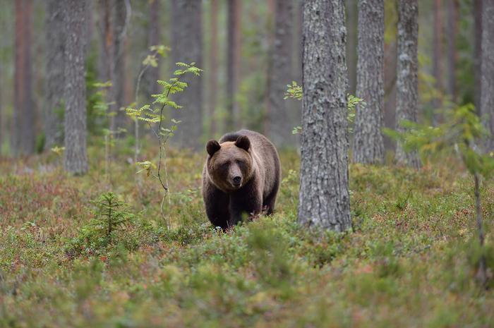 By zobaczyć dzikie zwierzęta w Bieszczadch, wystarczy trochę cierpliwości