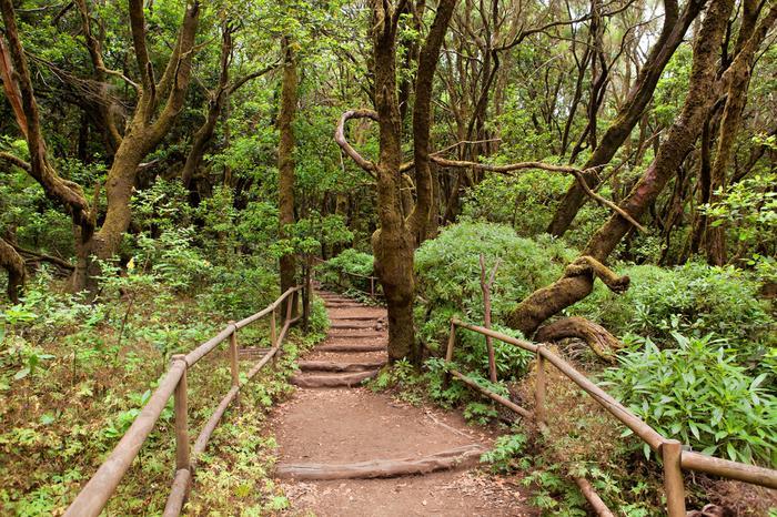 Wawrzynowy las na La Gomerze