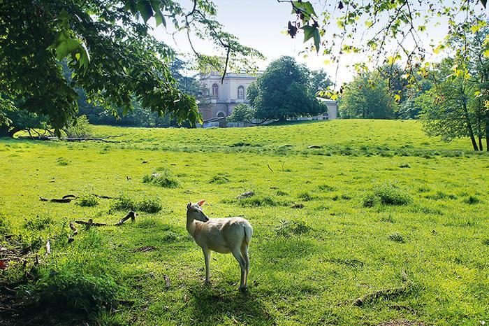 Park księcia Wilhelma w Putbus