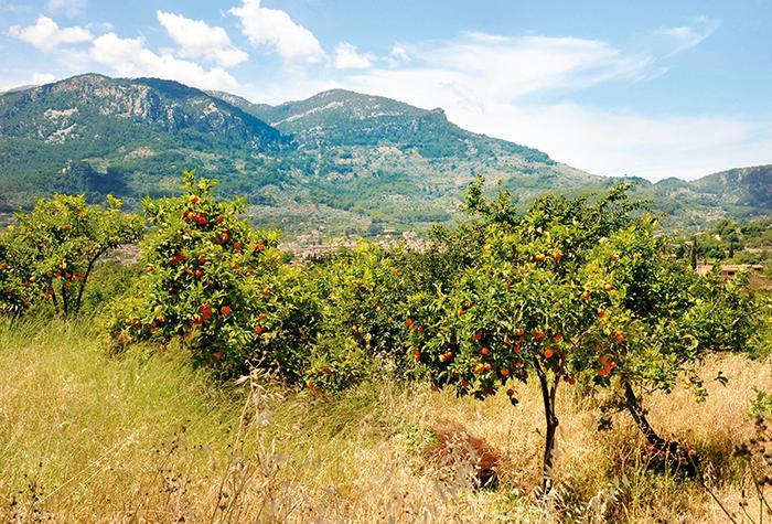 Góry Tramuntana