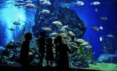 Zwiedzanie akwarium