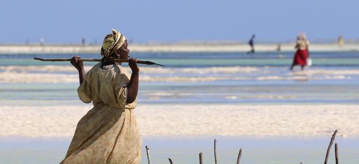 Kobiety odchodzą daleko od brzegu i zbierają owoce morza