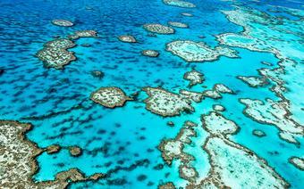 Nigdy nie kupuj pamiątek wykonanych z fragmentów rafy koralowej