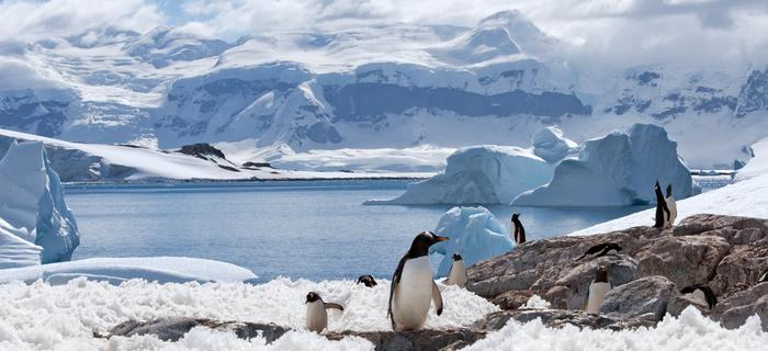 Pingwiny w Antarktyce