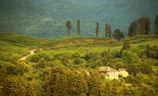 Gruzja. Plantacje herbaty w okolicach Batumi