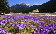 Najciekawsze miejsca w polskich Tatrach