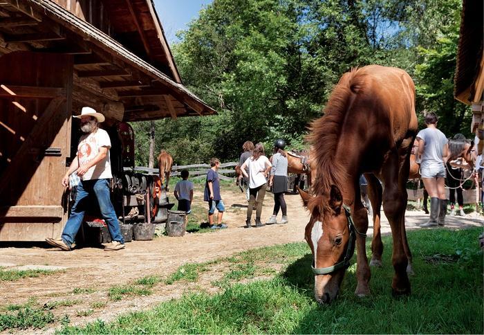 W gospodarstwie Dom Prezesa mieszka 19 koni
