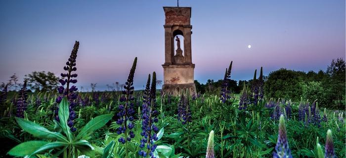 Zapomniana kapliczka pośrodku pola