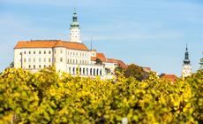 Czechy, winnica w Mikulovie jesienią