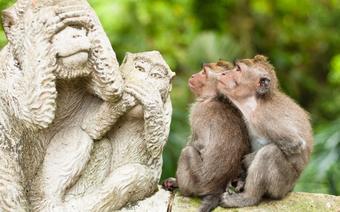 Małpi Las w Ubud - popularna atrakcja Bali