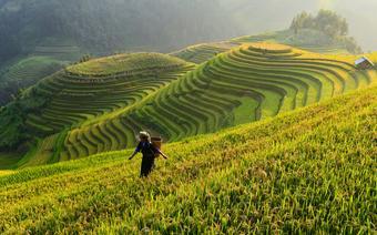 Do Wietnamu warto wybrać się w maju