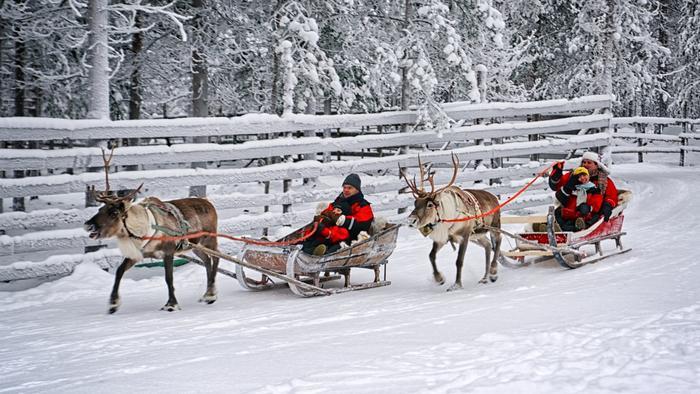 Rovaniemi. Wycieczka saniami zaprzężonymi w renifery