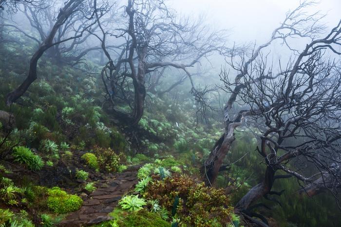 Madera - las wawrzynowy