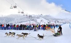 Festiwal Śnieżne Psy