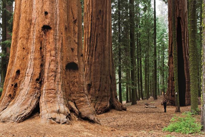 Kalifornia, Park Narodowy Sekwoi