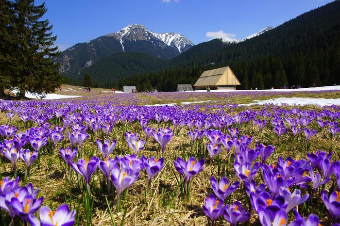 Dolina Chochłowska wiosną