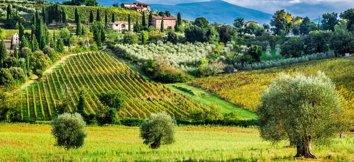 Toskania jak z obrazka, czyli winnice, wzgórza i cyprysy