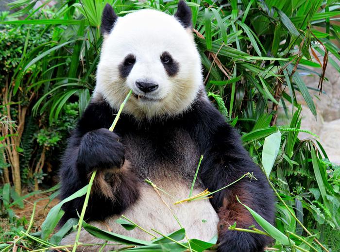 Pandaw Chinach