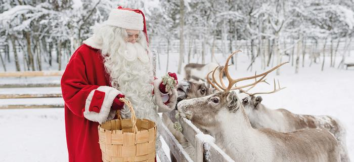 Święty Mikołaj karmi renifery w Rovaniemi w Laponii