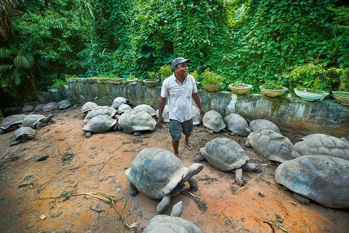 Seszele - żółwie olbrzymie