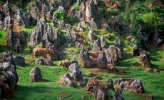 W Parku Przyrody Cabarceno zgromadzono prawie 150gatunków zwierząt zcałego świata