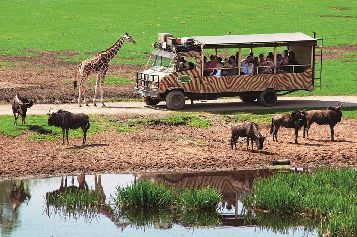 Serengeti-Parku w Hodenhagen