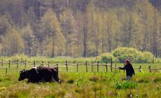 Łąki w okolicy Bagien Biebrzańskich