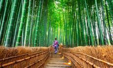 Las bambusowy w Kioto