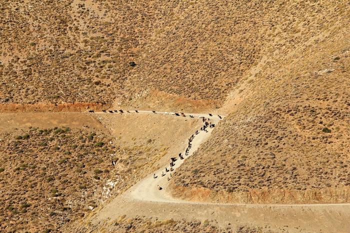 Kozy wędrujące wzgórzami Asterousi