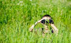 Chłopiec obserwuje przyrodę