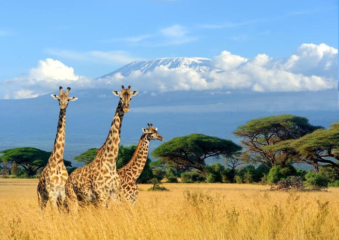 Kilimandżaro widziane od strony Kenii