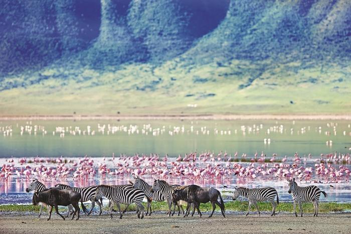 Ngorongoro, Serengeti, Tanzania