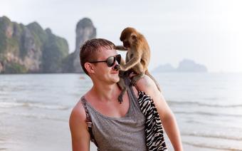 Małpy bywają zabawne, ale i niebezpieczne
