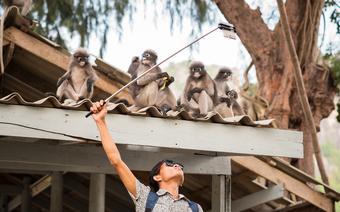Selfie z małpkami w Tajlandii