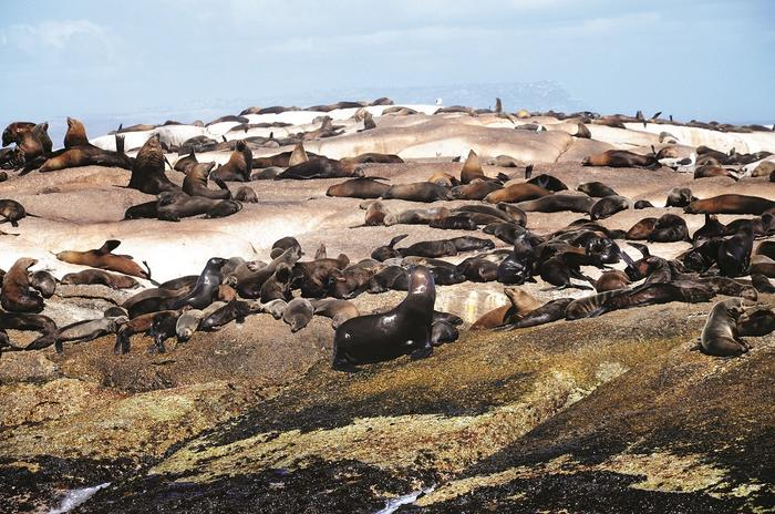 Foki w Haut Bay