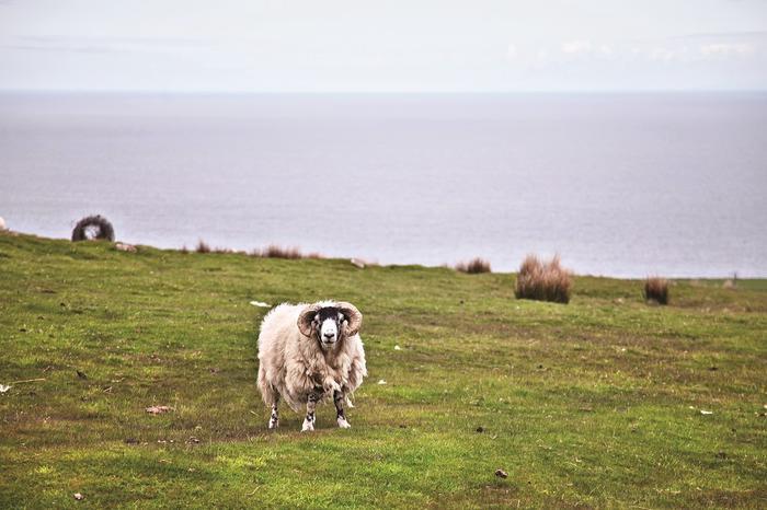 Wybrzeże Irlandii Północnej
