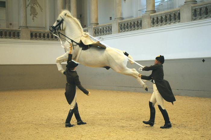 Hiszpańska Szkoła Jazdy w Wiedniu, fot. Herbert Graf